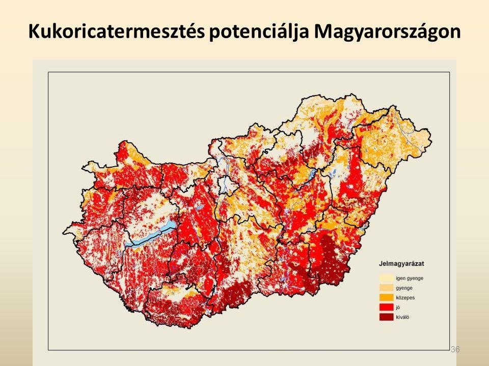 Kukoricatermesztés potenciálja Magyarországon