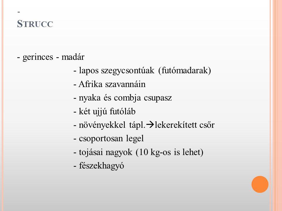 - Strucc