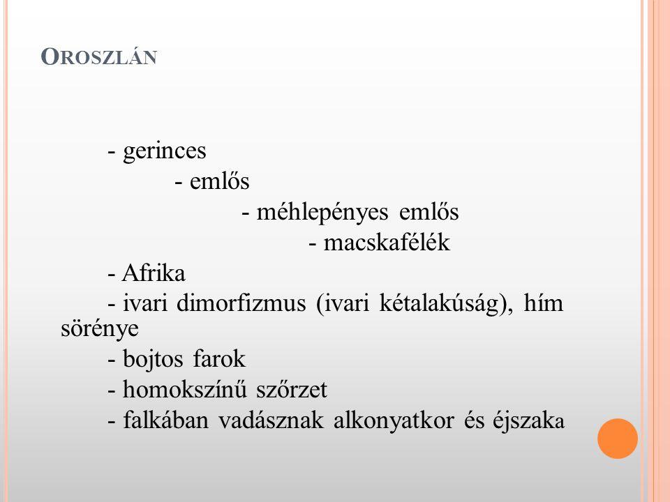 - ivari dimorfizmus (ivari kétalakúság), hím sörénye - bojtos farok