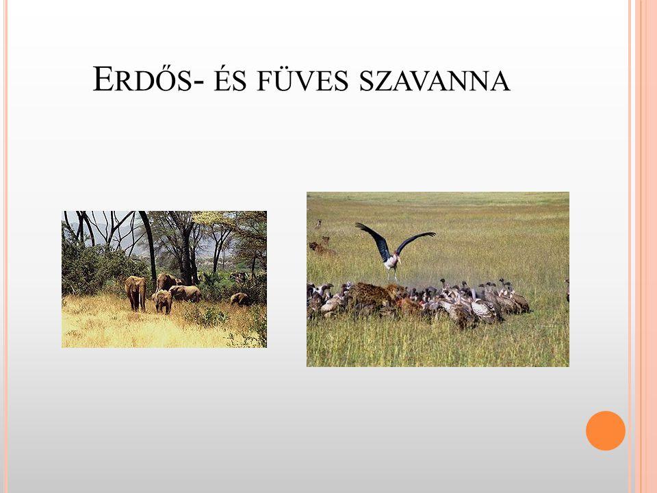 Erdős- és füves szavanna