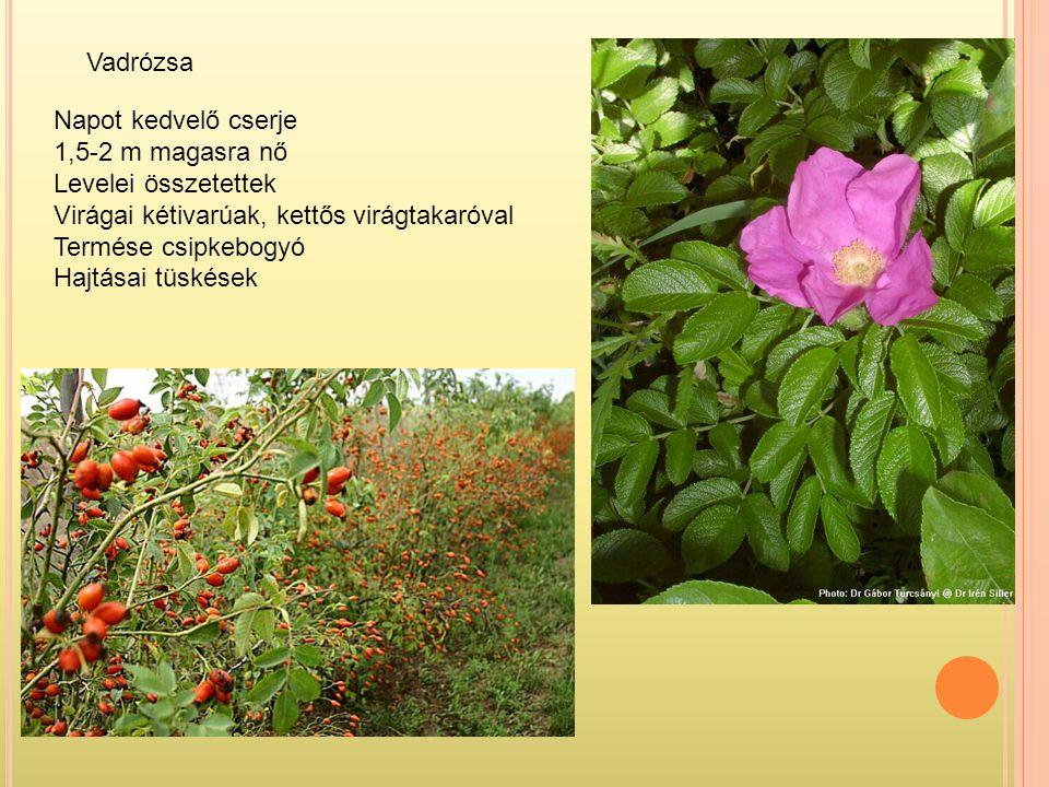 Vadrózsa Napot kedvelő cserje. 1,5-2 m magasra nő. Levelei összetettek. Virágai kétivarúak, kettős virágtakaróval.