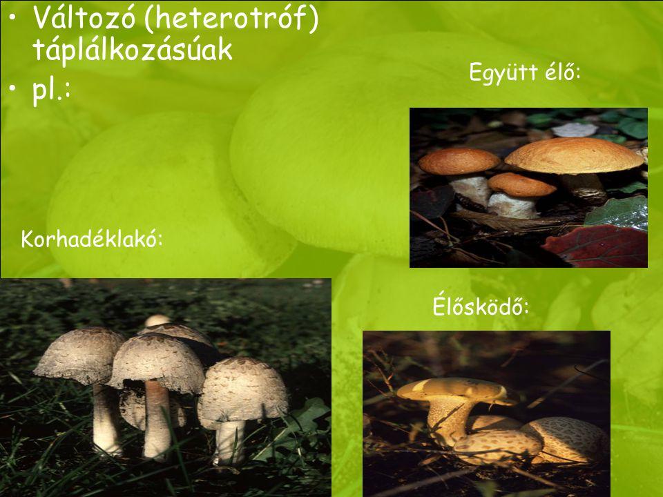 Változó (heterotróf) táplálkozásúak pl.: