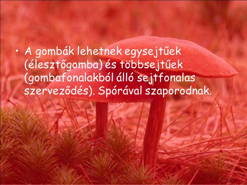 A gombák lehetnek egysejtűek (élesztőgomba) és többsejtűek (gombafonalakból álló sejtfonalas szerveződés).
