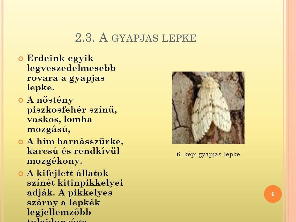 2.3. A gyapjas lepke Erdeink egyik legveszedelmesebb rovara a gyapjas lepke. A nőstény piszkosfehér színű, vaskos, lomha mozgású,