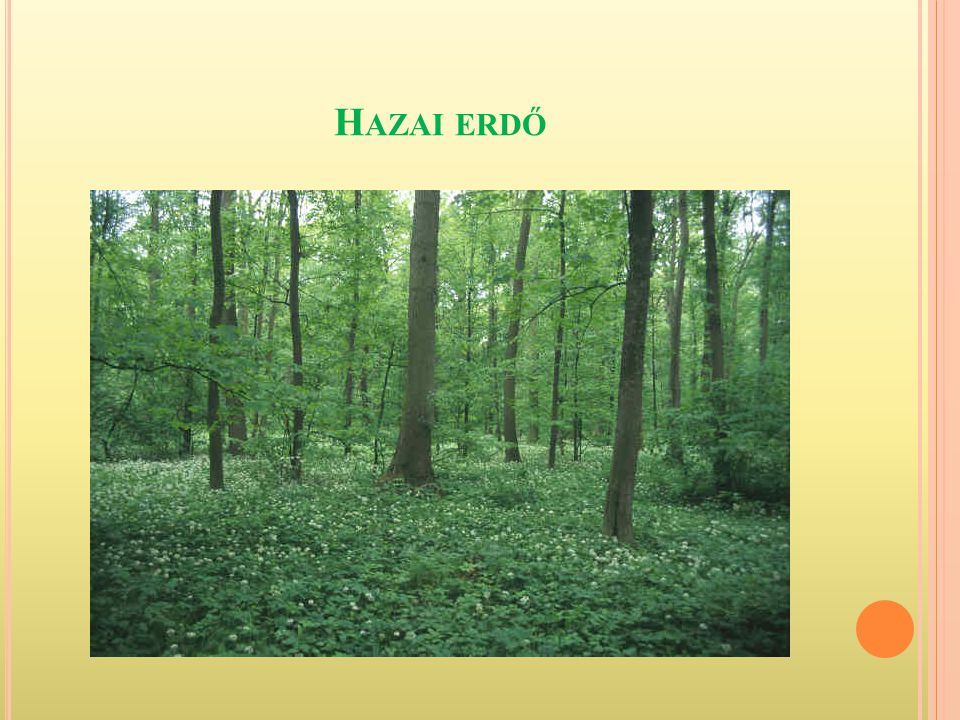 Hazai erdő