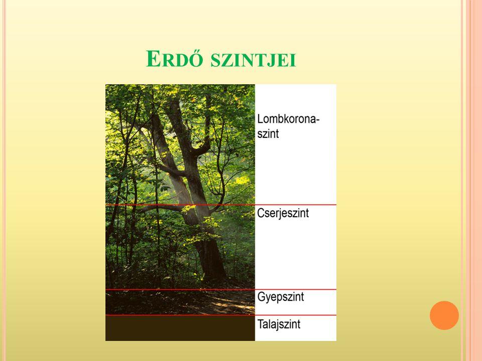 Erdő szintjei