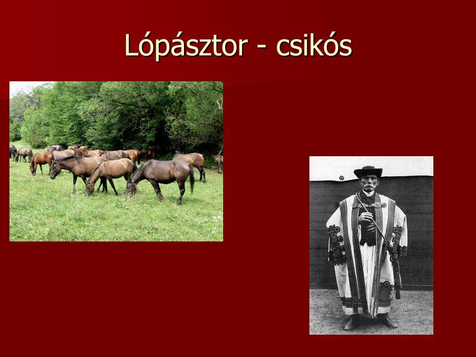 Lópásztor - csikós