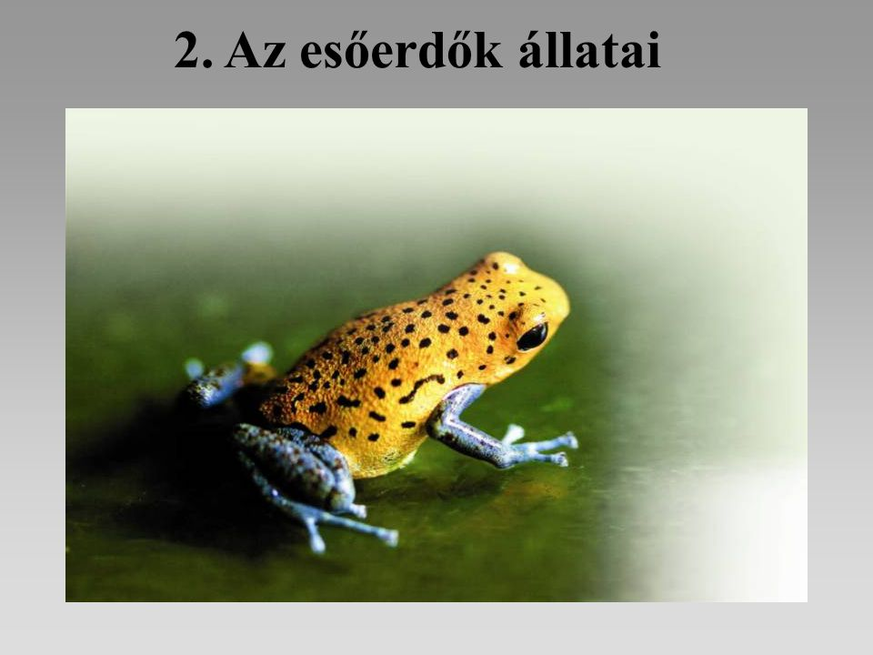 2. Az esőerdők állatai
