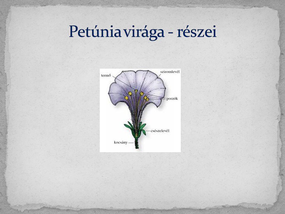 Petúnia virága - részei