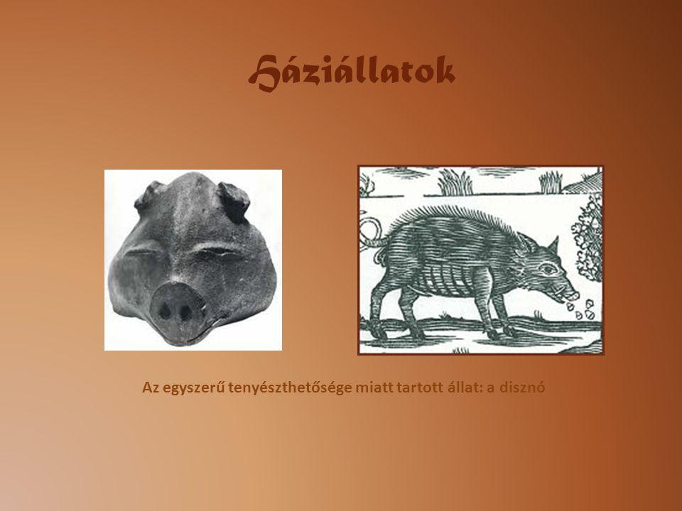 Az egyszerű tenyészthetősége miatt tartott állat: a disznó