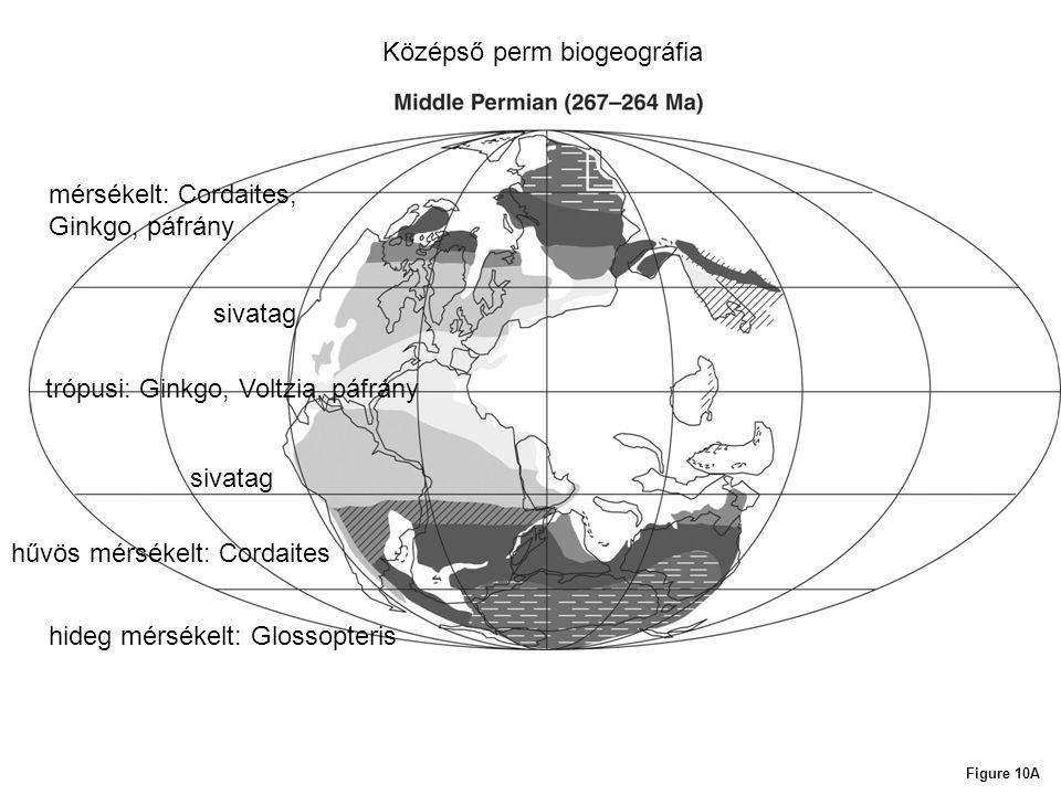 Középső perm biogeográfia