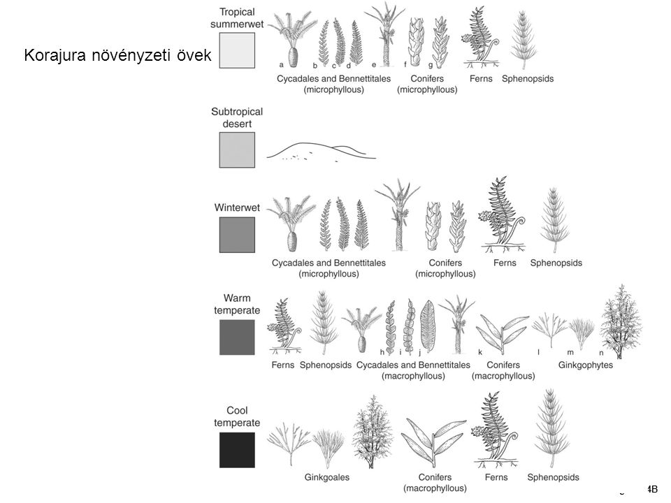 Korajura növényzeti övek