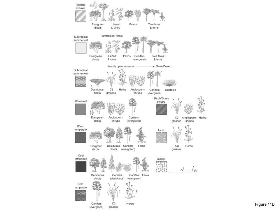 Figure 11B