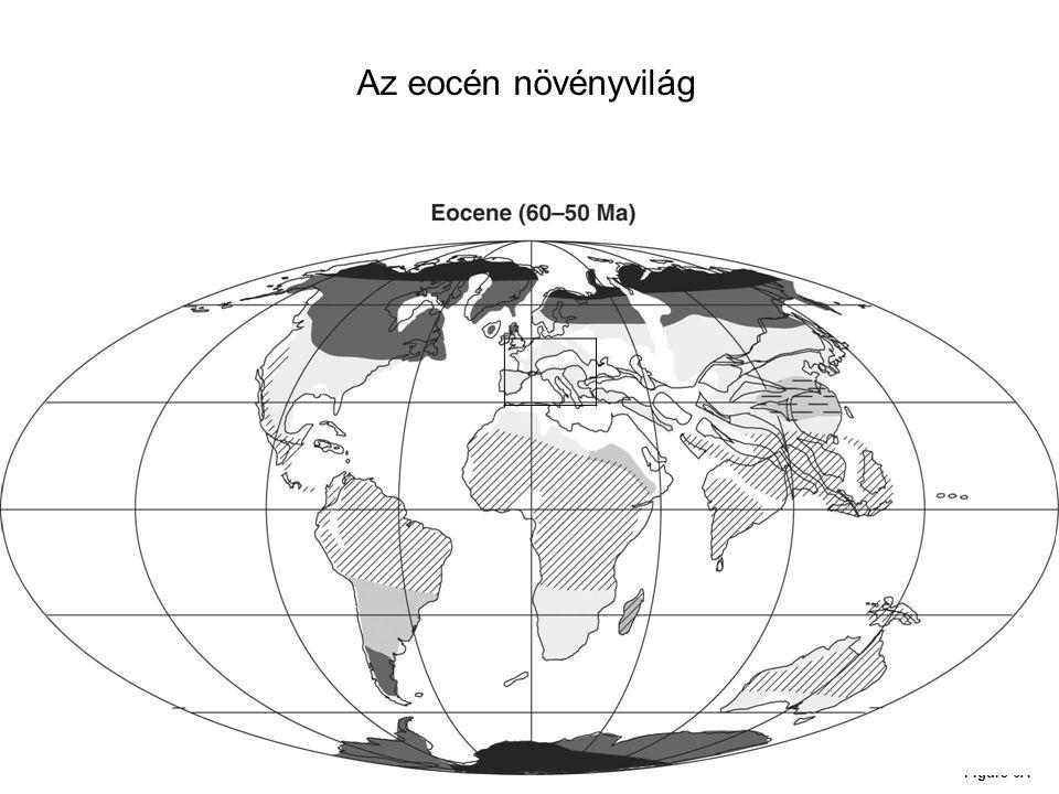 Az eocén növényvilág Figure 6A