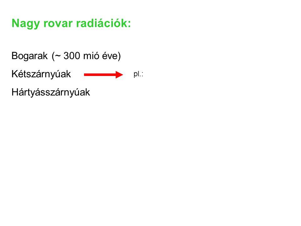 Nagy rovar radiációk: Bogarak (~ 300 mió éve) Kétszárnyúak
