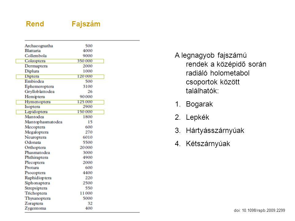 Rend Fajszám A legnagyob fajszámú rendek a középidő során radiáló holometabol csoportok között találhatók:
