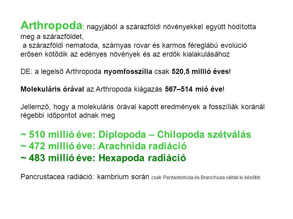 Arthropoda: nagyjából a szárazföldi növényekkel együtt hódította meg a szárazföldet,
