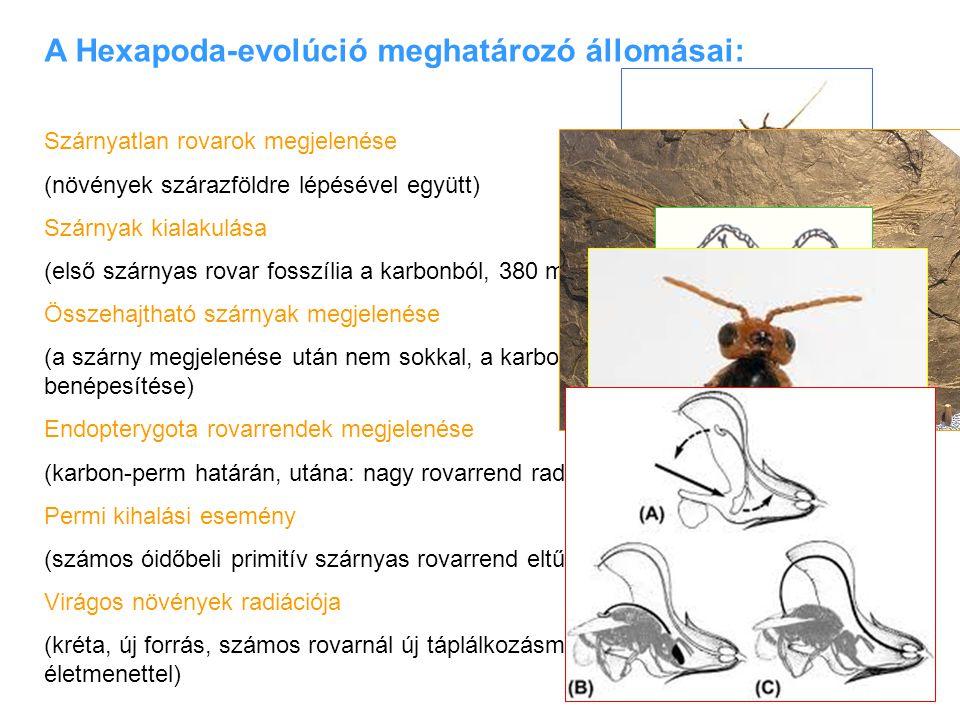 A Hexapoda-evolúció meghatározó állomásai: