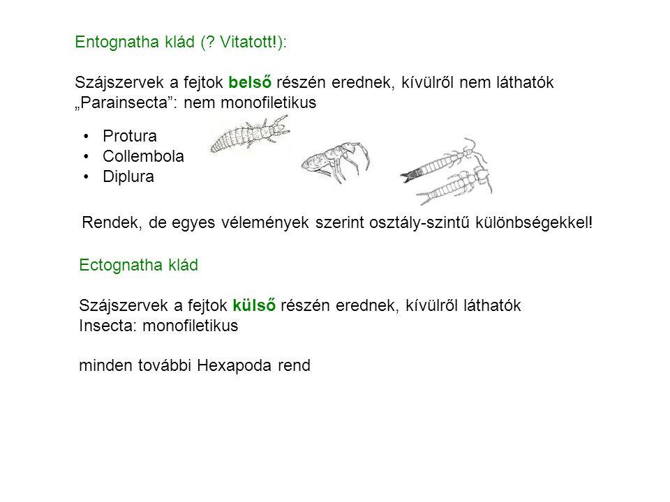 Entognatha klád ( Vitatott!):