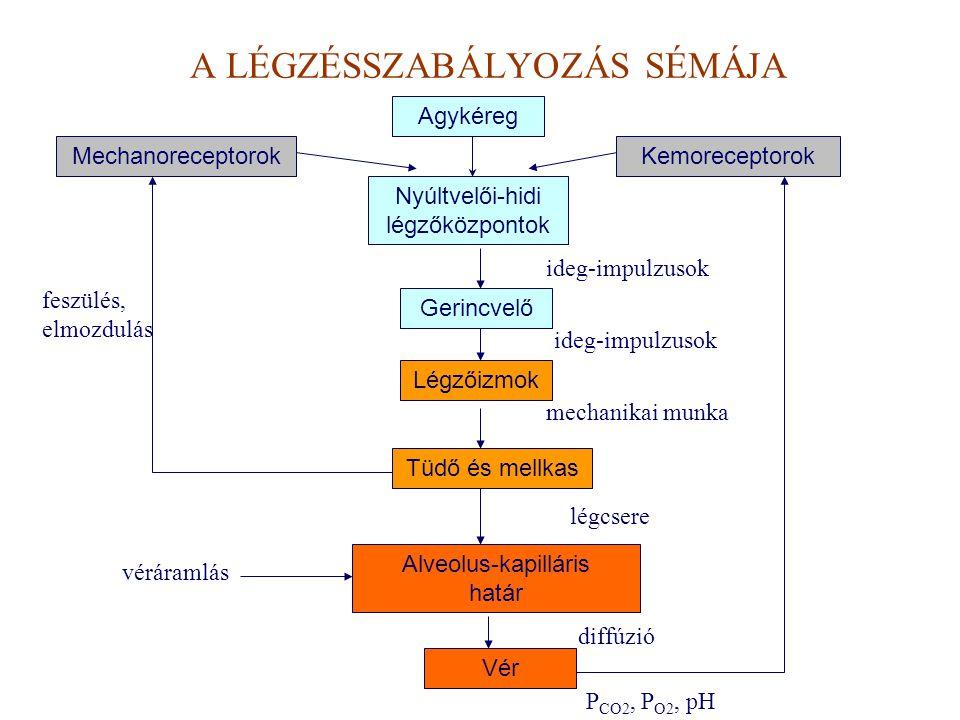 A LÉGZÉSSZABÁLYOZÁS SÉMÁJA