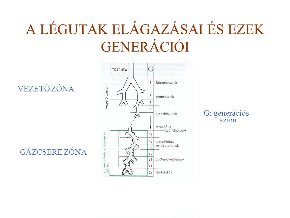 A LÉGUTAK ELÁGAZÁSAI ÉS EZEK GENERÁCIÓI