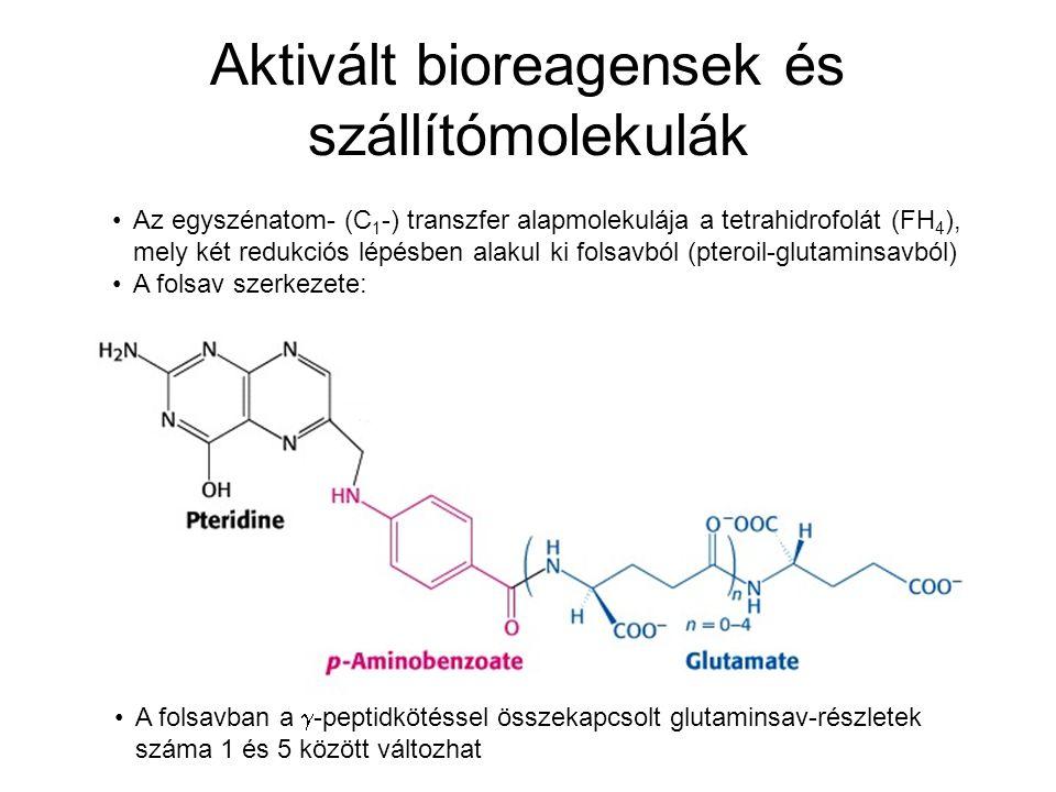 Aktivált bioreagensek és szállítómolekulák