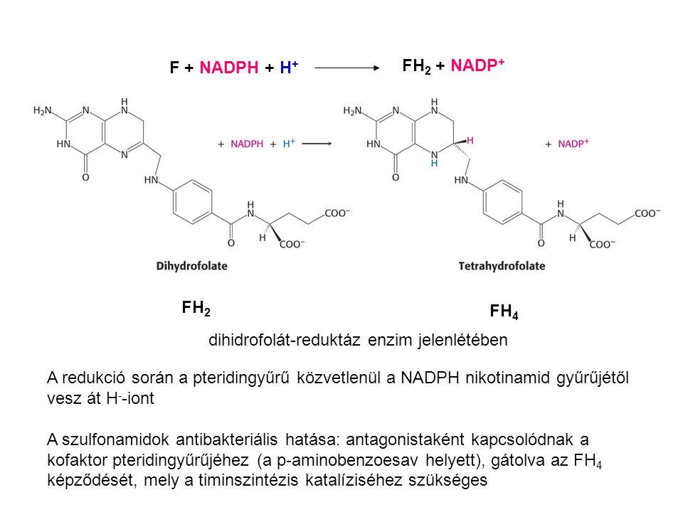 F + NADPH + H+ FH2 + NADP+ FH2. FH4. dihidrofolát-reduktáz enzim jelenlétében.