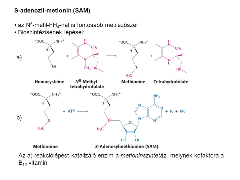S-adenozil-metionin (SAM)
