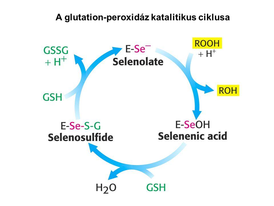 A glutation-peroxidáz katalitikus ciklusa