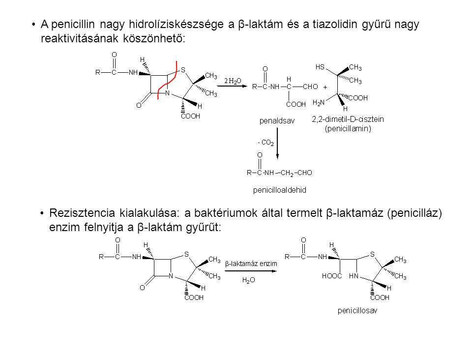 A penicillin nagy hidrolíziskészsége a β-laktám és a tiazolidin gyűrű nagy reaktivitásának köszönhető: