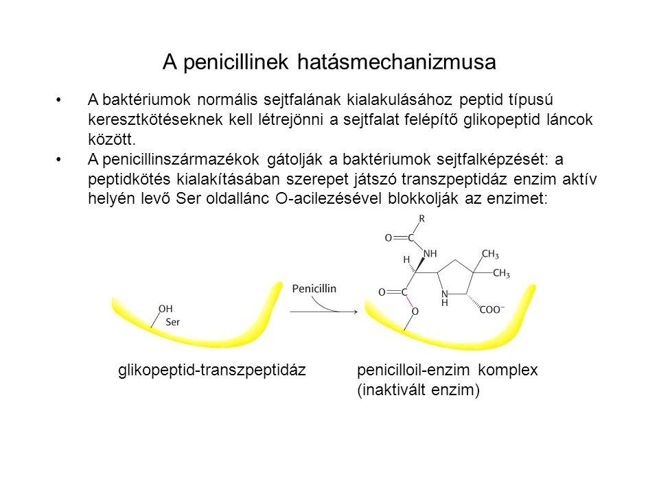 A penicillinek hatásmechanizmusa