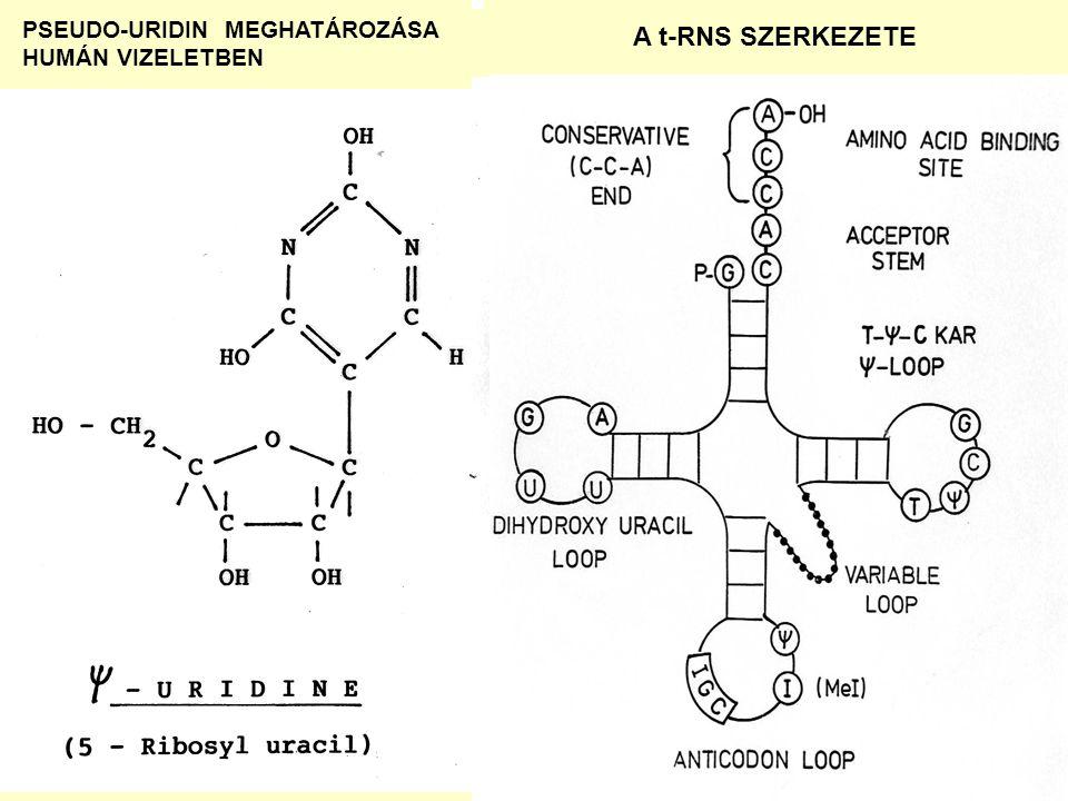 A t-RNS SZERKEZETE PSEUDO-URIDIN MEGHATÁROZÁSA HUMÁN VIZELETBEN