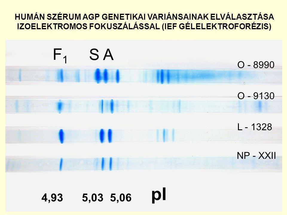 HUMÁN SZÉRUM AGP GENETIKAI VARIÁNSAINAK ELVÁLASZTÁSA