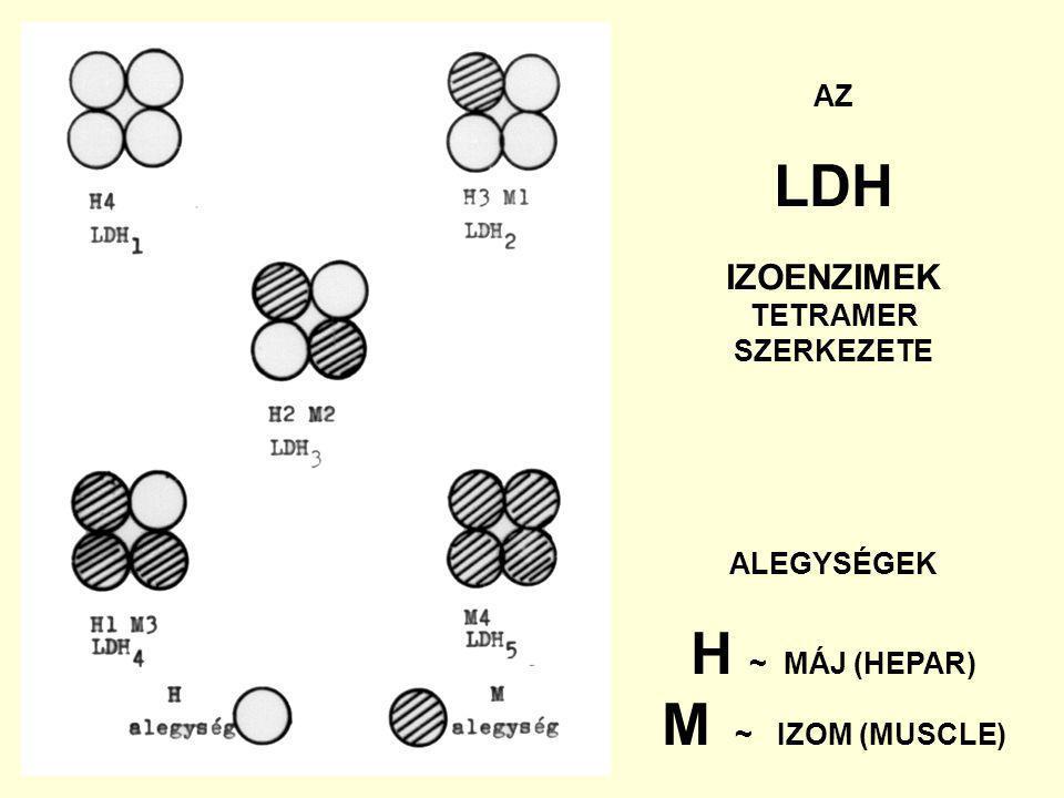 LDH H ~ MÁJ (HEPAR) M ~ IZOM (MUSCLE)