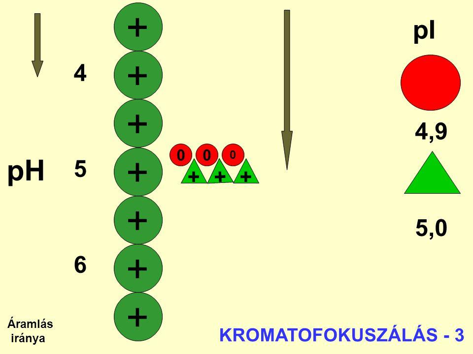 + + + + + + + pH pI 4 5 4,9 6 7 5,0 + + + KROMATOFOKUSZÁLÁS - 3