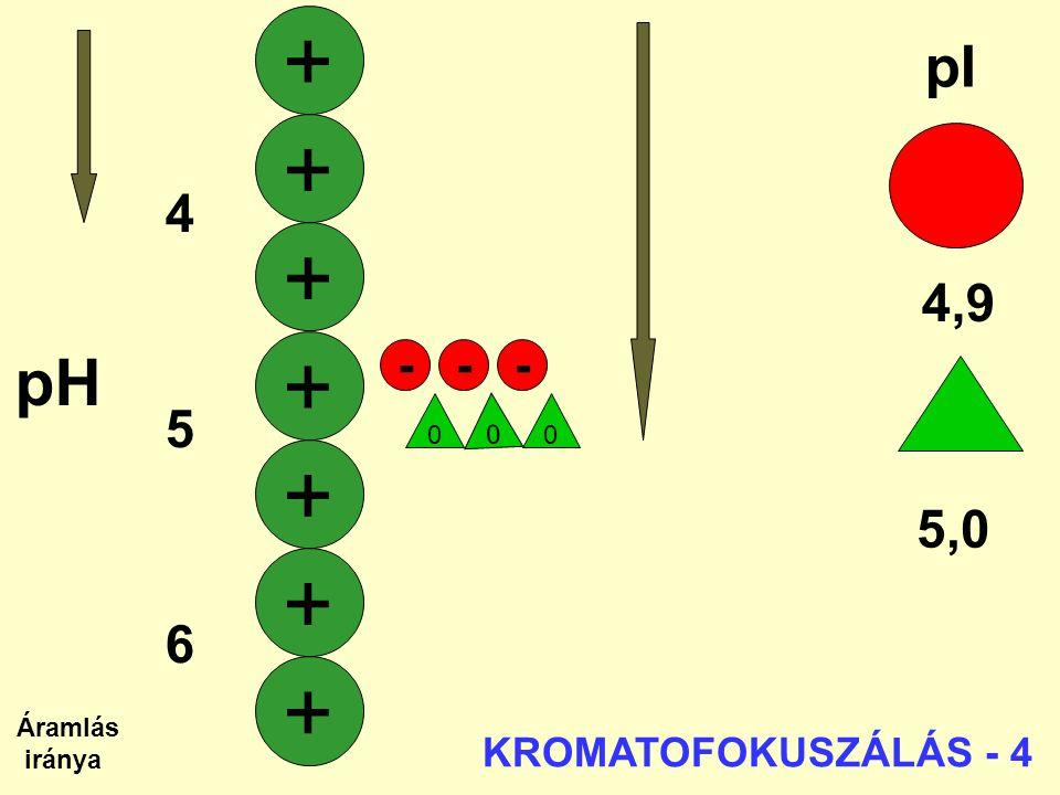 + + + + + + + pH pI 4 4,9 5 6 5,0 7 - - - KROMATOFOKUSZÁLÁS - 4