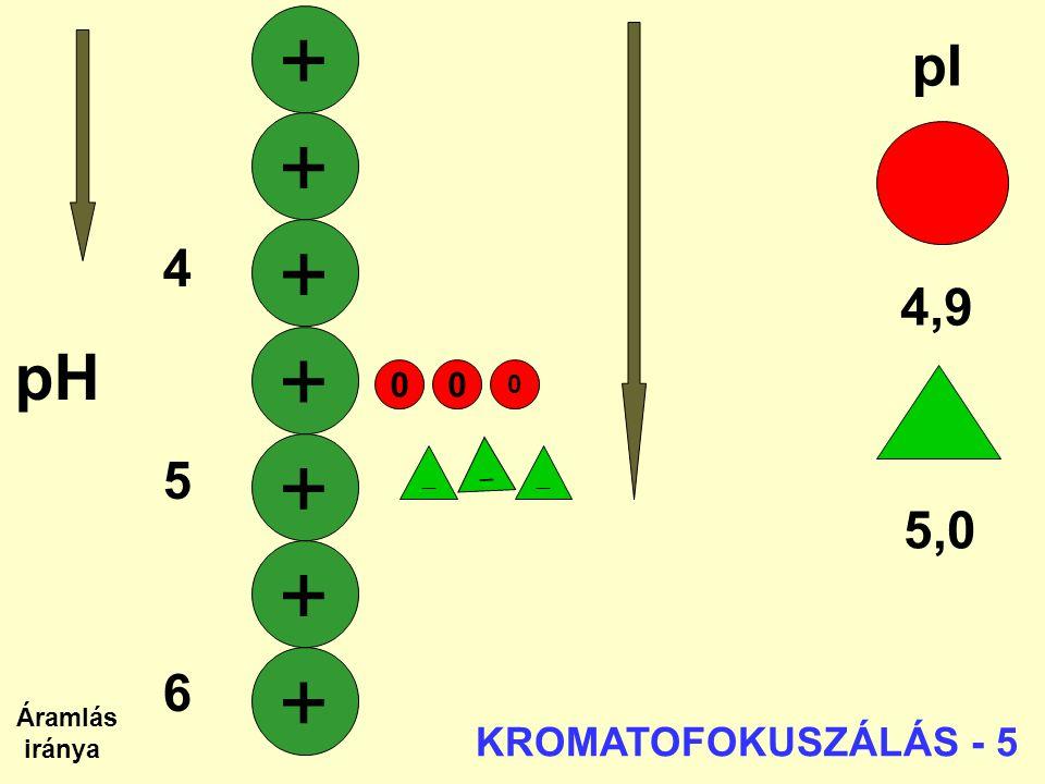 + + + + + + + pH pI 4 4,9 5 6 5,0 7 KROMATOFOKUSZÁLÁS - 5   