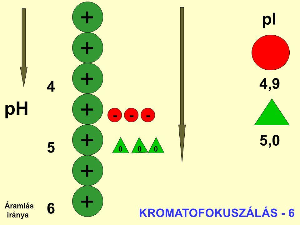 + + + + + + + pH pI 4,9 4 5 5,0 6 7 - - - KROMATOFOKUSZÁLÁS - 6