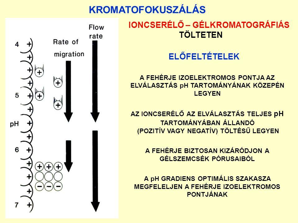 KROMATOFOKUSZÁLÁS IONCSERÉLŐ – GÉLKROMATOGRÁFIÁS TÖLTETEN