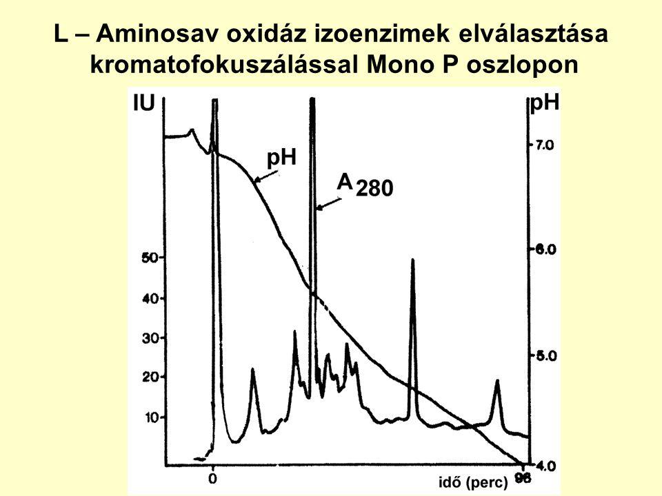 L – Aminosav oxidáz izoenzimek elválasztása