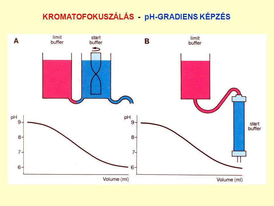 KROMATOFOKUSZÁLÁS - pH-GRADIENS KÉPZÉS
