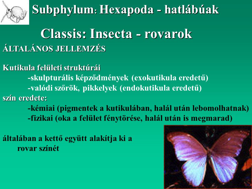 Classis: Insecta - rovarok