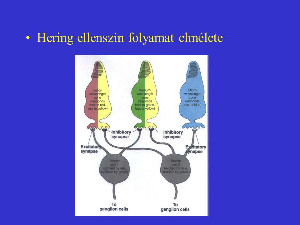 Hering ellenszín folyamat elmélete