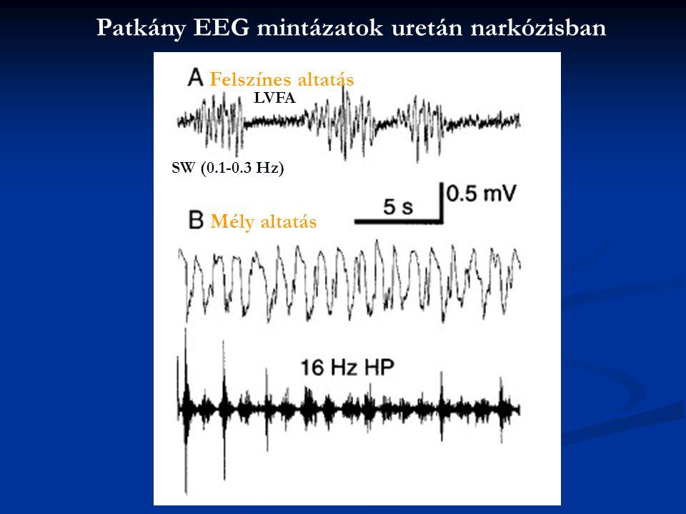 Patkány EEG mintázatok uretán narkózisban