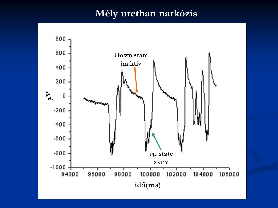 Mély urethan narkózis μV idő(ms) Down state inaktív up state aktív