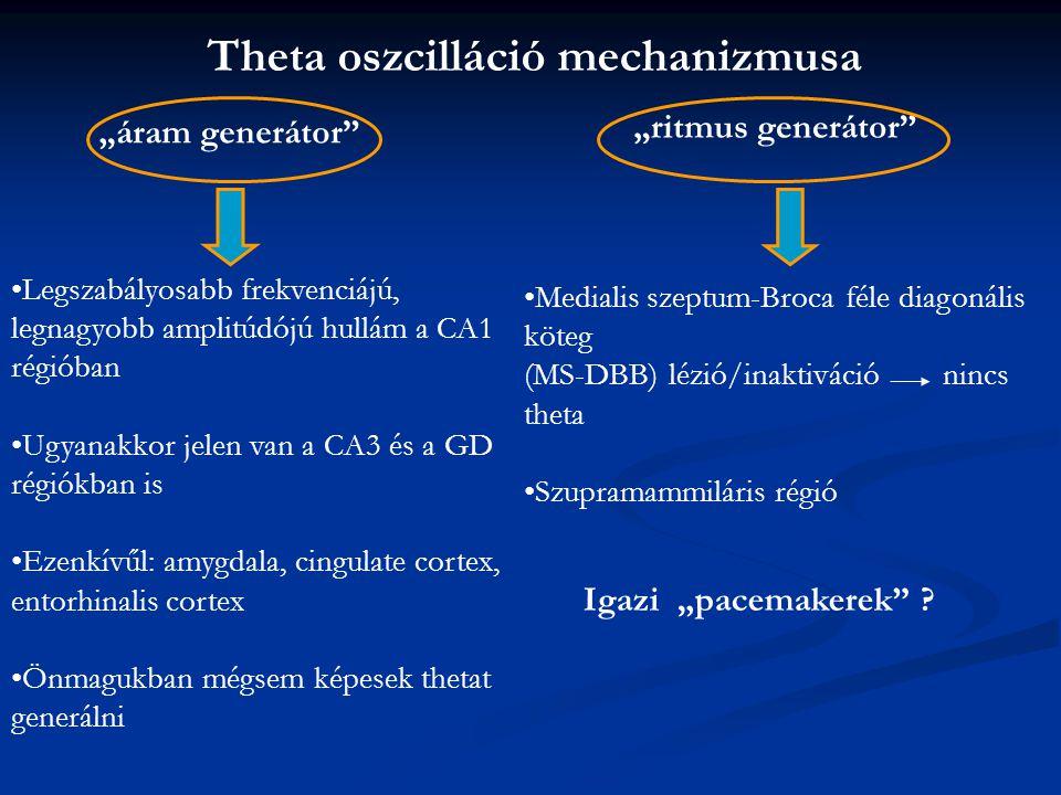 Theta oszcilláció mechanizmusa
