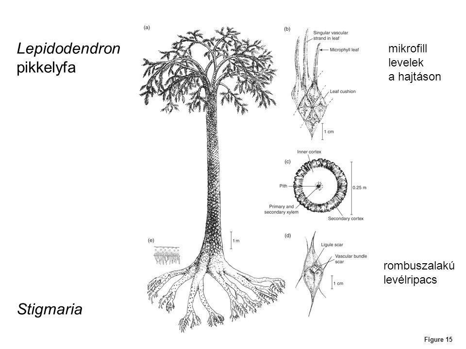 Lepidodendron pikkelyfa Stigmaria mikrofill levelek a hajtáson