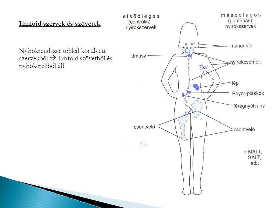 Iimfoid szervek és szövetek