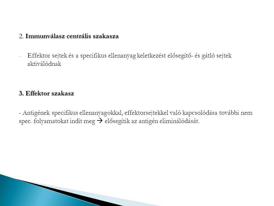 2. Immunválasz centrális szakasza