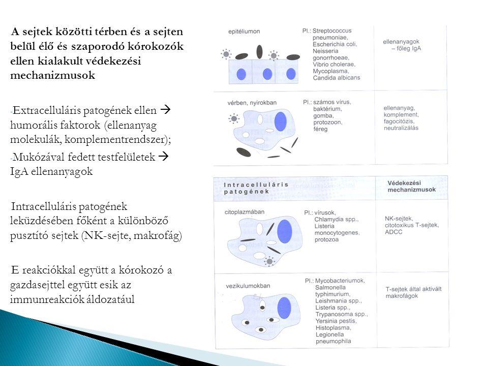 A sejtek közötti térben és a sejten belül élő és szaporodó kórokozók ellen kialakult védekezési mechanizmusok